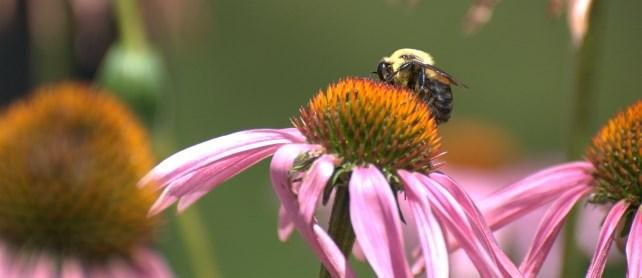 Bee on purple flower.